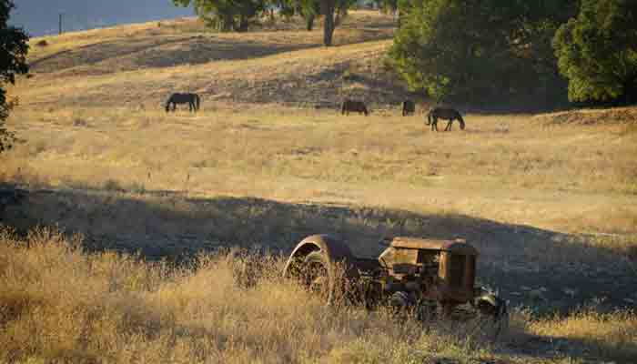 A old tractor setting in the field where horses are grazing